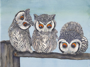 Owl:  White Faced Scops Owls