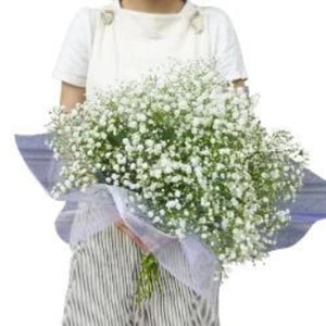 Flower Gypsophila