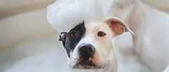 HOW OFTEN SHOULD YOU BATH YOUR DOG