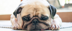 ANXIETY IN DOGS - SIGNS, SYMPTOMS & TREATMENT