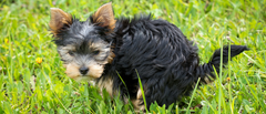 IS YOUR DOG POOPING TOO MUCH?