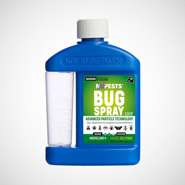 DIY Spray for Carpet Beetle