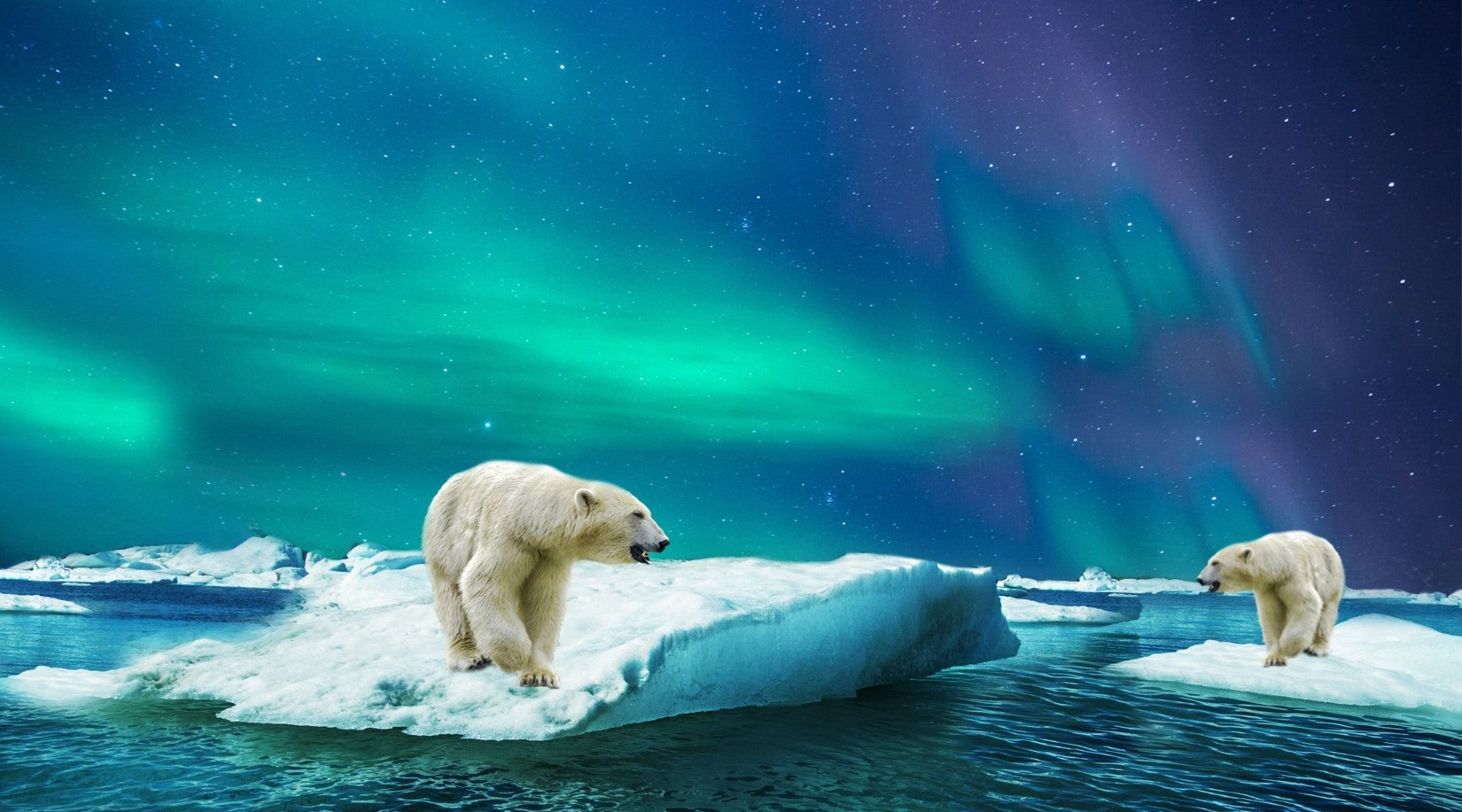 polar bears in greenland with northern lights