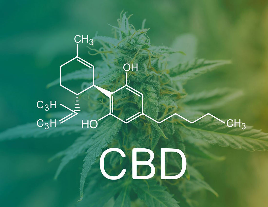 Setting the industry standard for CBD Oil production