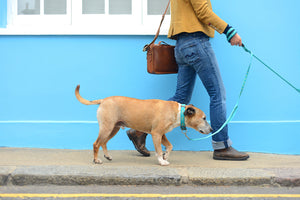 Bertie & Bella's Double Handle Dog Lead