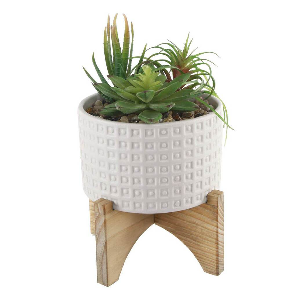 Succulent In Wht Pot W/ Stand