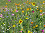 Bees Seed Mix
