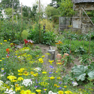 Meadow In My Veg Garden