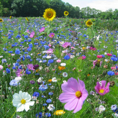 Bees Flower Meadow