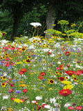 Ladybirds Seed Mix