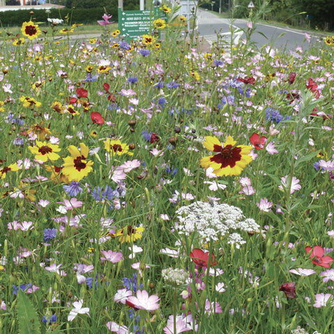 Short Perennial Seed Mix