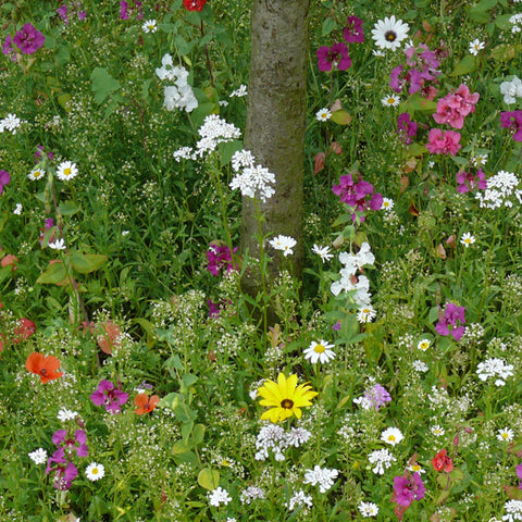 Tree Foot Seed Mix
