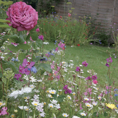 Shrub and Rose Seed Mix