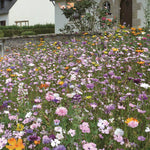 Perennial Seed Mix