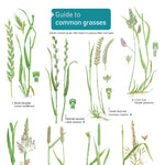 Common Grasses