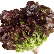 Red Leaf Lettuce (One head)