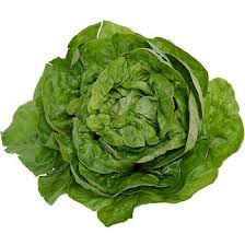 Bibb Lettuce (One head)