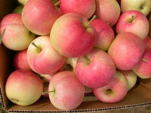 Pink Lady Apples (2 lbs.)