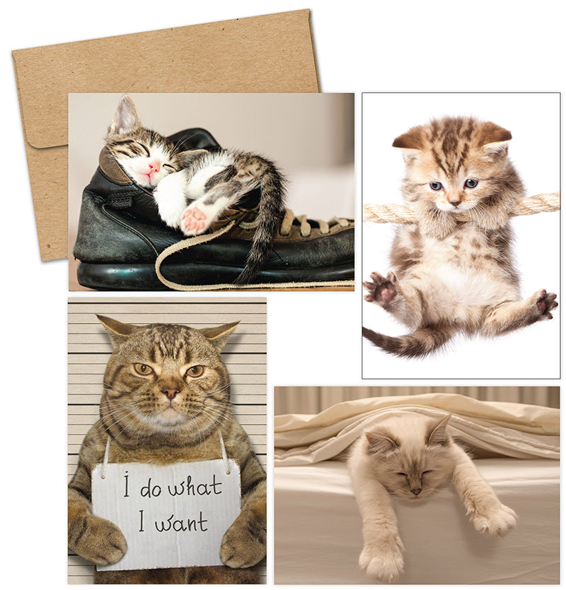 Kitty Thoughts Multi-Pack Note Cards