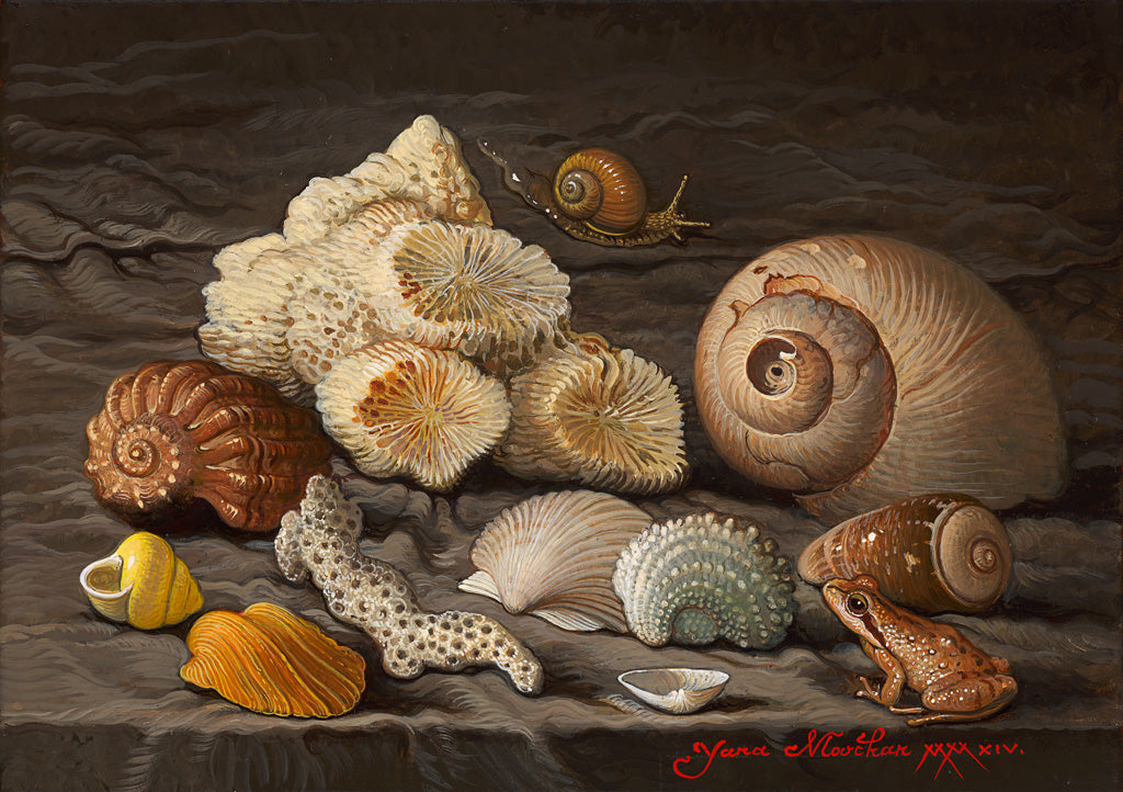 Life Between Shells
