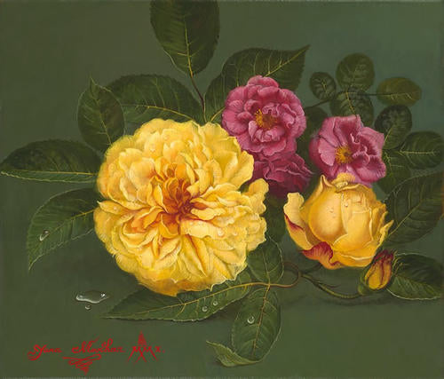 Rose D Or and Rosa Gallica
