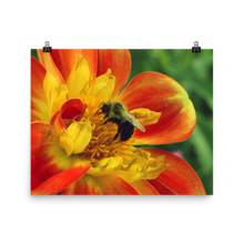 Load image into Gallery viewer, Bumble Bee Matte Print
