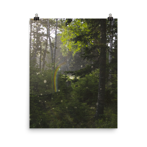 Rainbow in Forest Matte Print