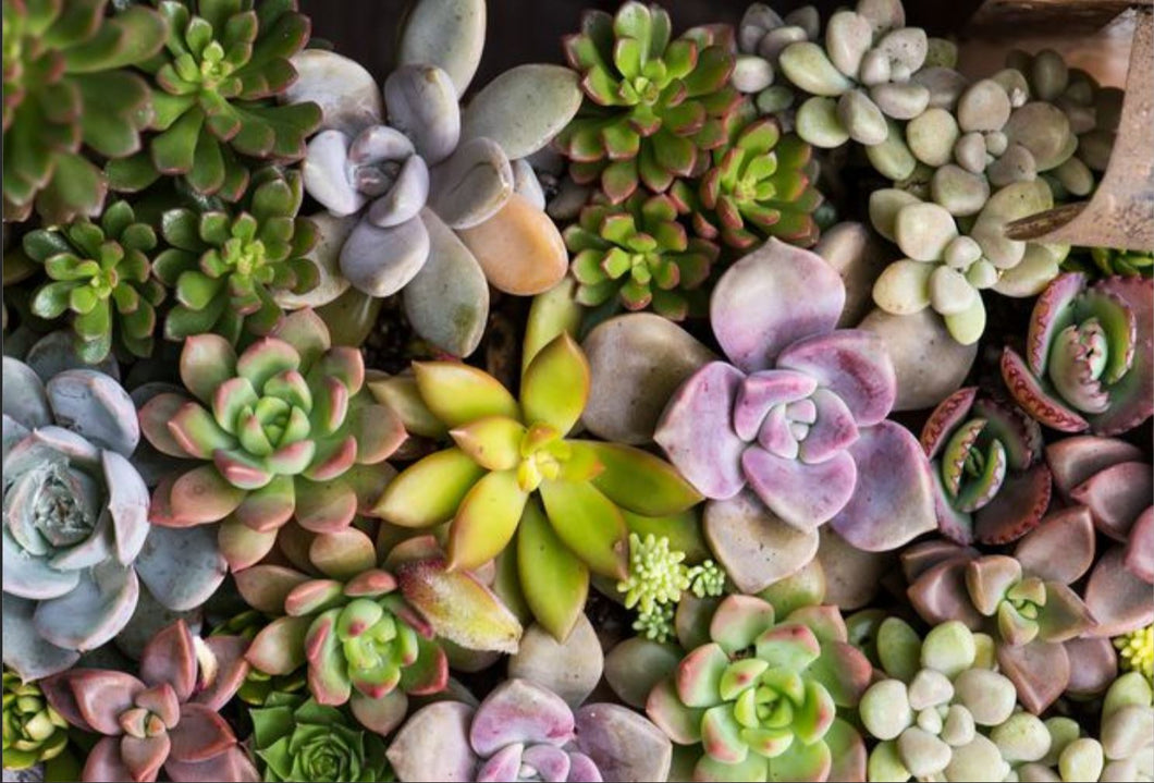 05/11/2019 (11am) Mommy & Me Succulent Box Workshop (Ocala)