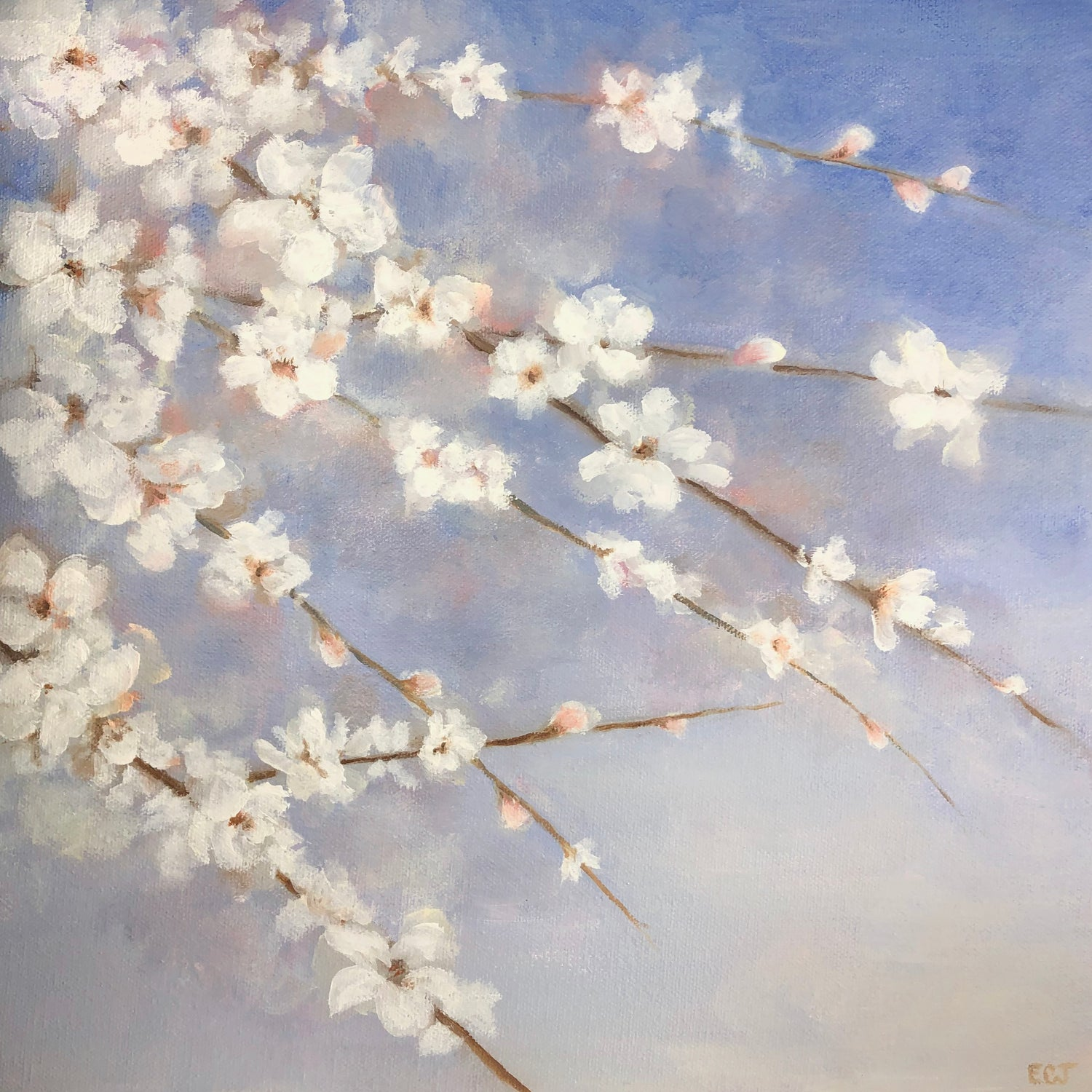 "Blue Sky White Blossoms, 12""x12"""
