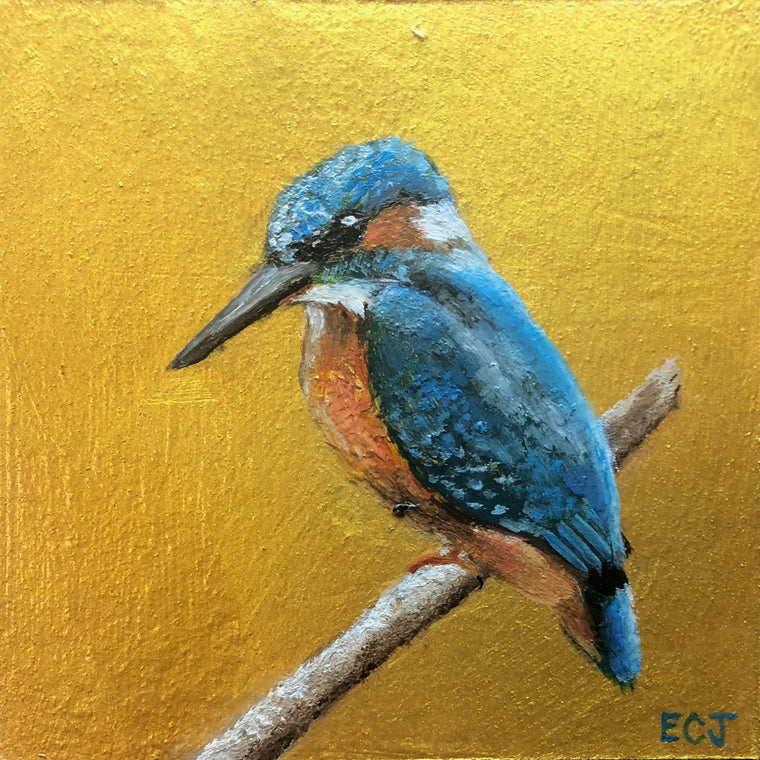 Gold Kingfisher, 5