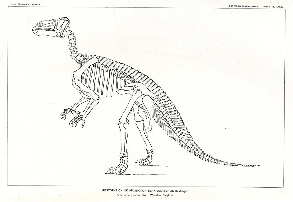 Detail of 'Iguanodon bernissartensis' by unknown