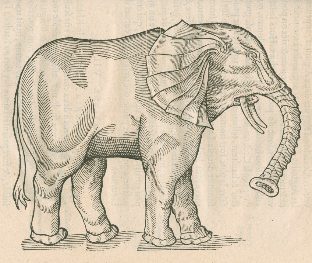 Detail of 'Figure d'un Elephant' by Anonymous