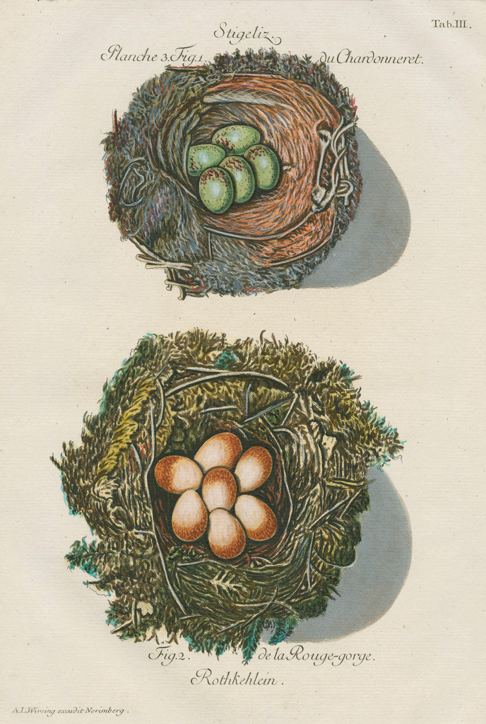 Detail of Nests of the Goldfinch and the Robin by Adam Ludwig Wirsing