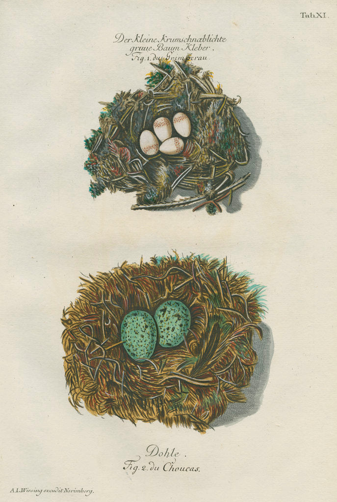 Detail of Nests of the Nuthatch and the Jackdaw by Adam Ludwig Wirsing