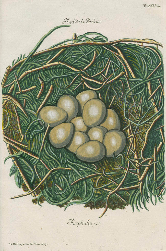 Detail of Nest of the Grey partridge by Adam Ludwig Wirsing