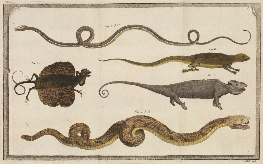 Detail of Five specimens of reptiles by T Cole