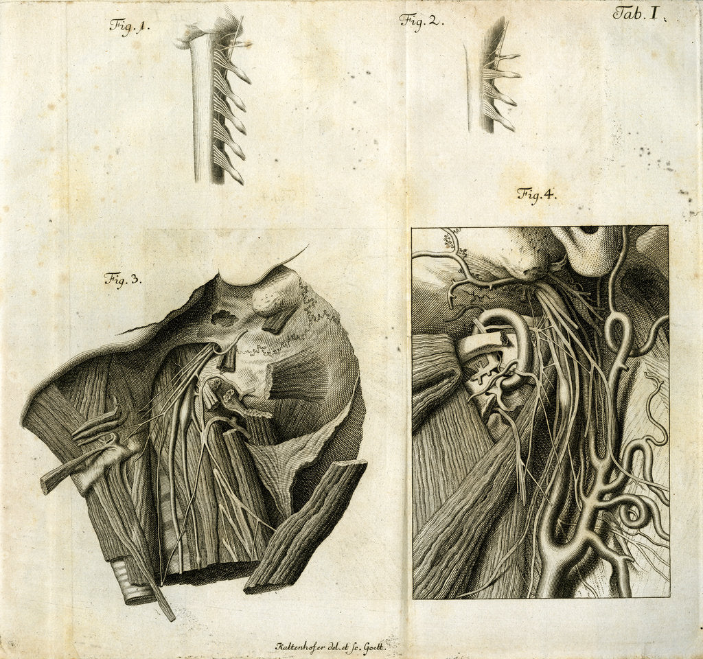 Detail of Details of the anatomy of the head and neck by Goett