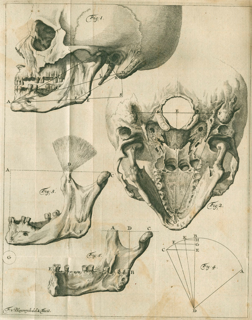 Detail of Views of the skull and jaw by Françoise van Bleyswyck