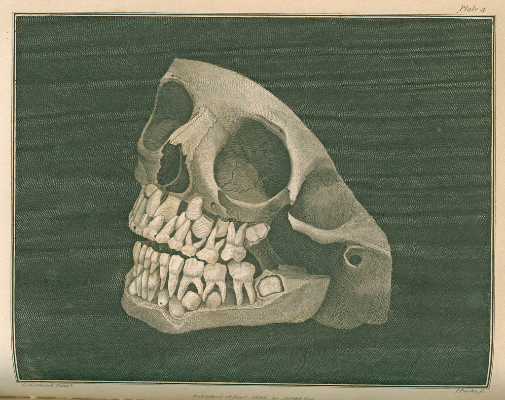 Detail of The two sets of teeth at six years of age by Parks