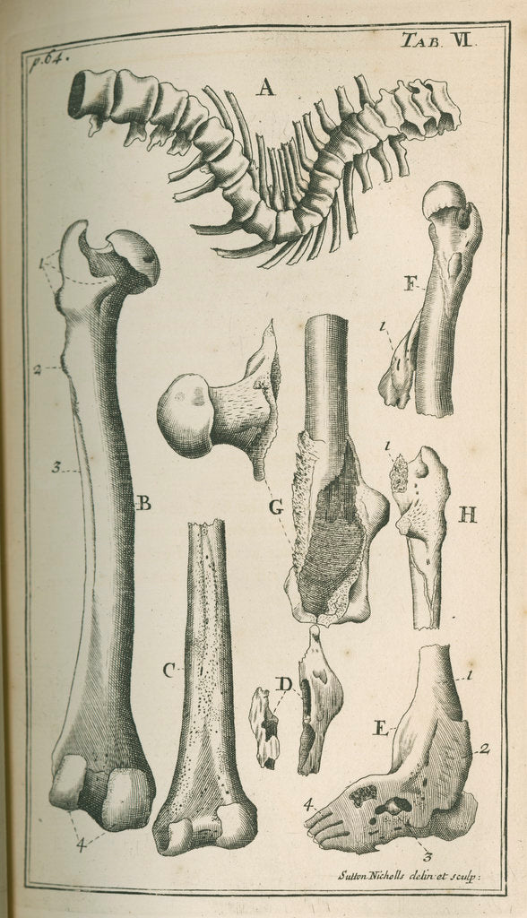 Detail of Various human bones by Sutton Nicholls