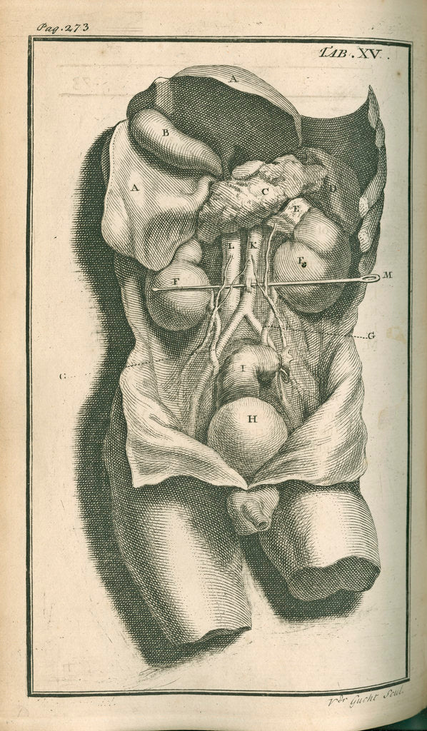 Detail of The internal organs by Gerard Vandergucht