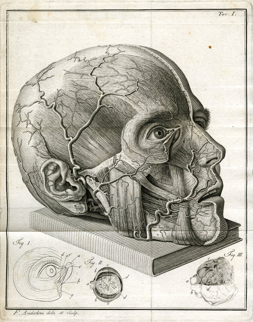 Detail of Human head and diagrams of the eye by Faustino Anderloni