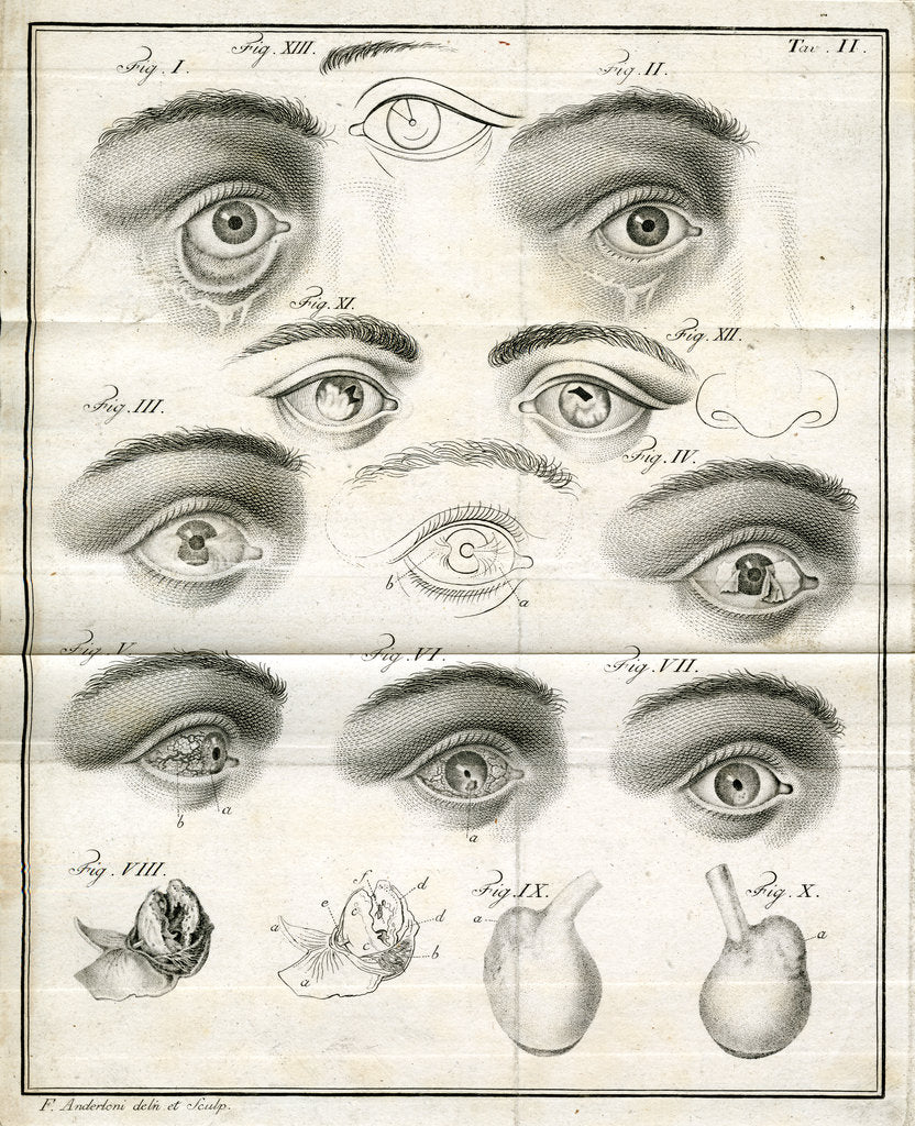 Detail of Diagrams of the eye by Faustino Anderloni