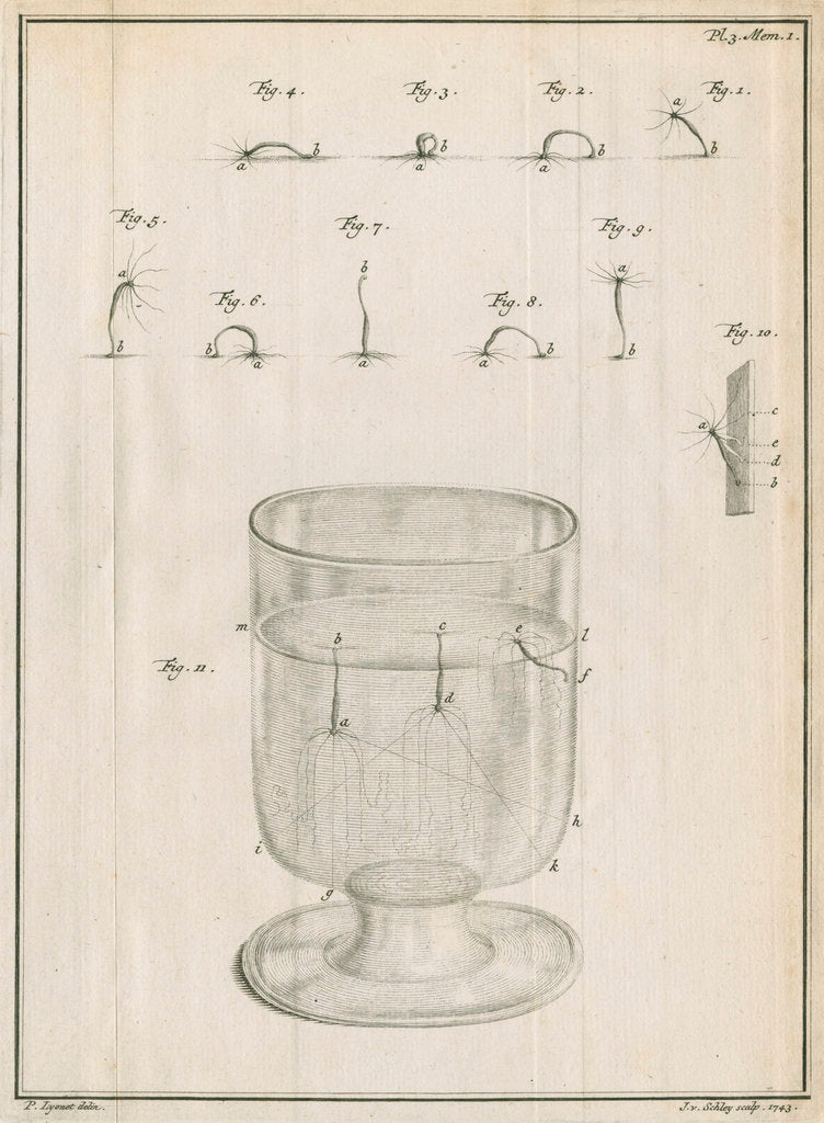 Detail of Polyps in a glass with studies of locomotion by Jacobus van der Schley