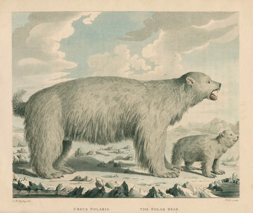 'The Polar Bear' by George Noble