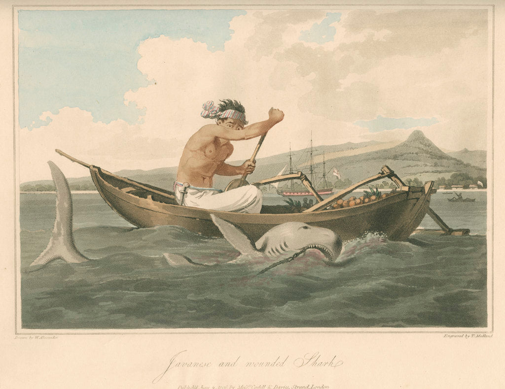 Detail of 'Javanese and wounded Shark' by Thomas Medland