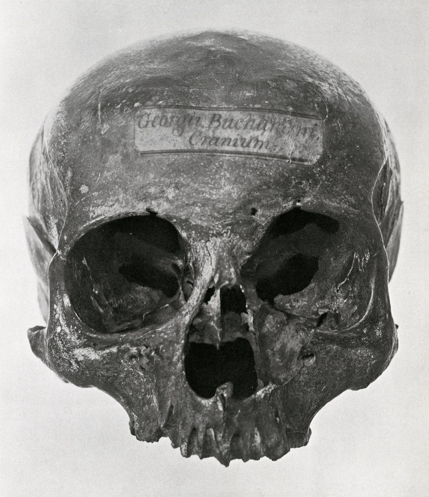 Detail of George Buchanan's skull by unknown
