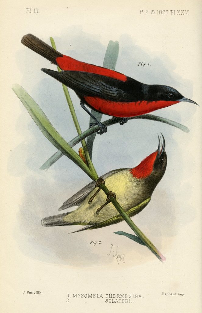 Detail of Honeyeaters by Joseph Smit