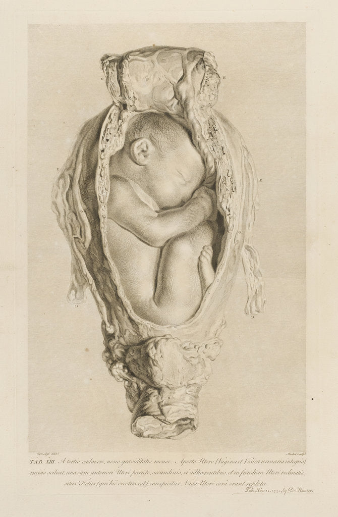 Detail of Foetus in the womb by Christian von Mechel