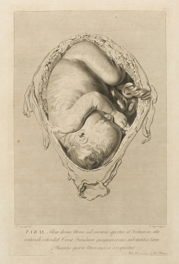 Detail of Foetus in the womb by Henry Bryer